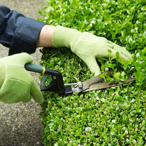 Green Office Maintenance Service
